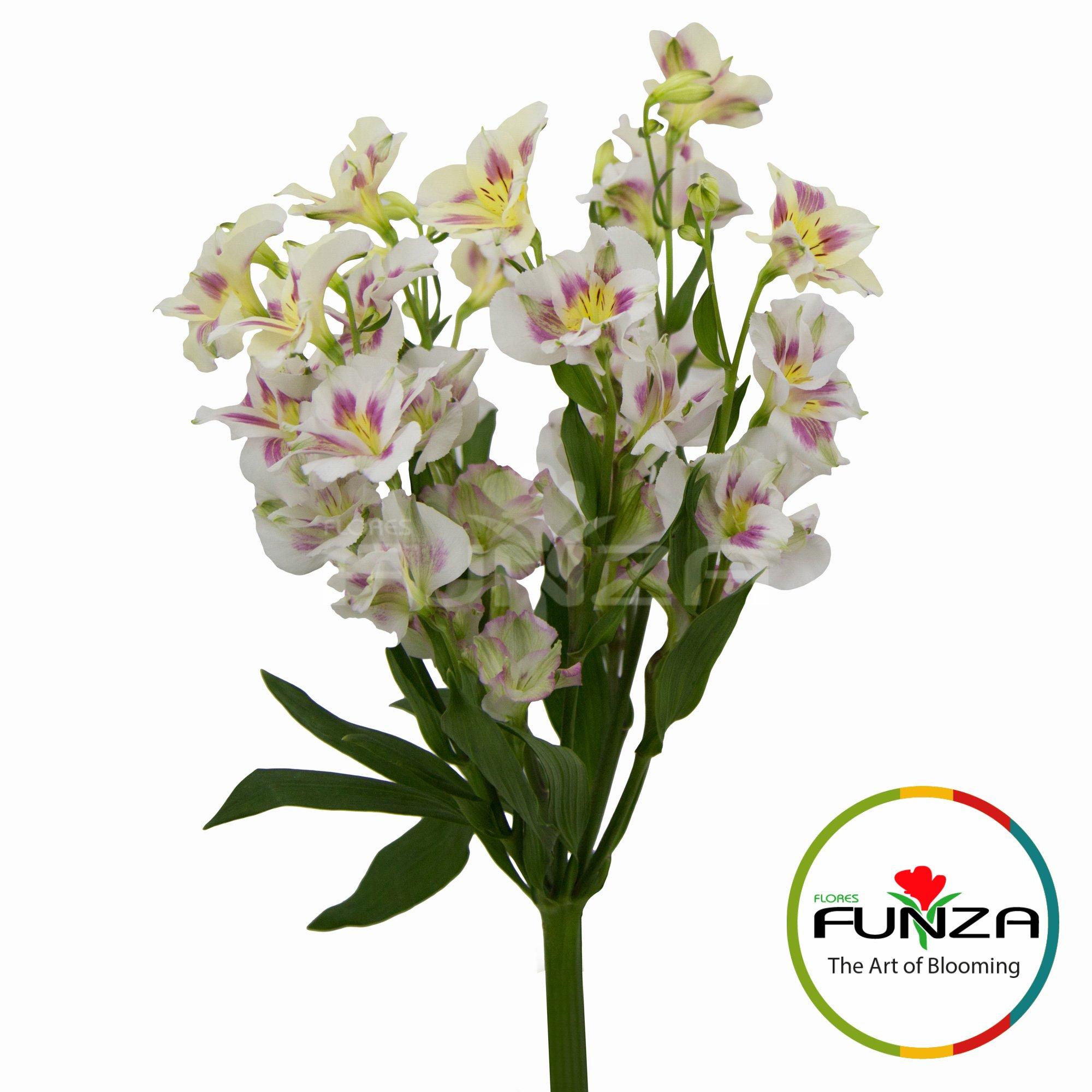 Ballet (3) - Flores Funza