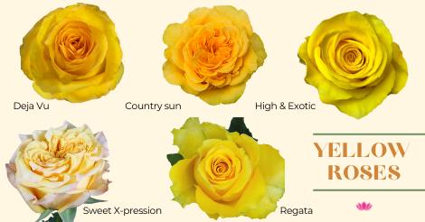 Yello roses from iBuyFlowers.com