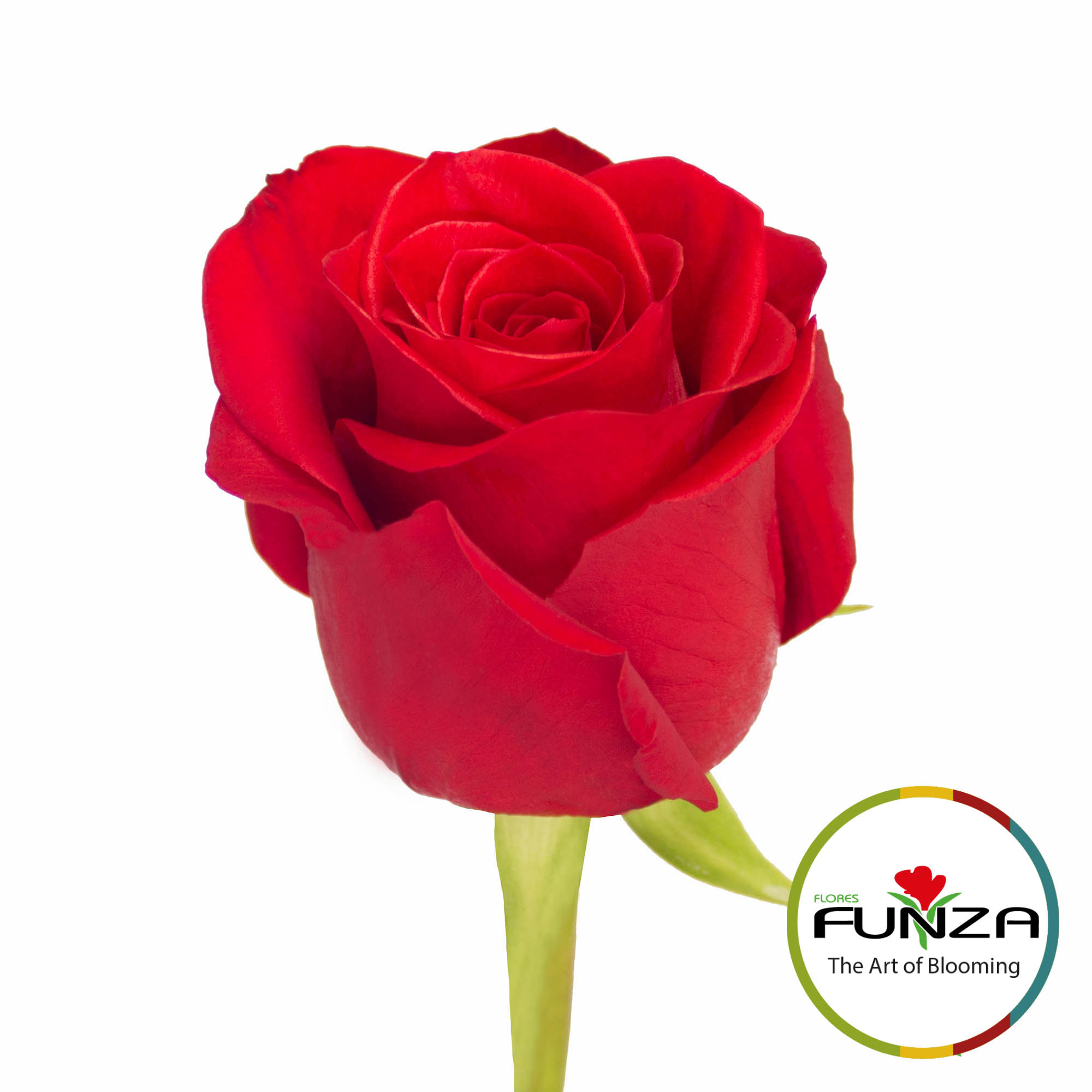 Freedom (3)- Flores Funza