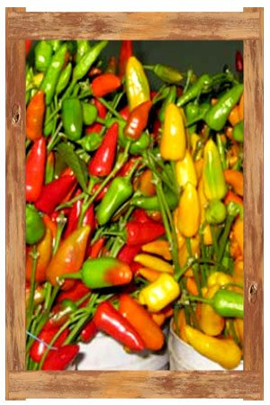 chil_peppers