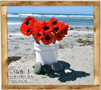 gallery_red_sunlower_small