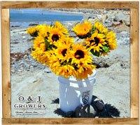 gallery_sunflower1_small
