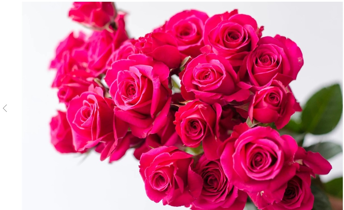 hot_pink_roses