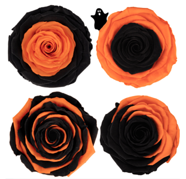 preserved roses vampire collection wholesale