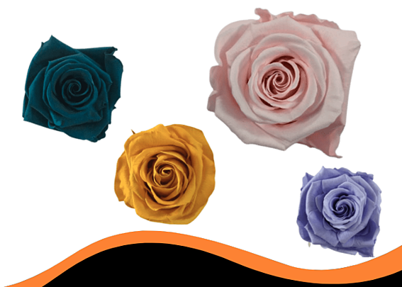 complete collection preserved roses