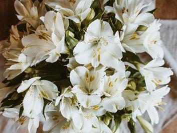 pexels-flora-westbrook-4227650